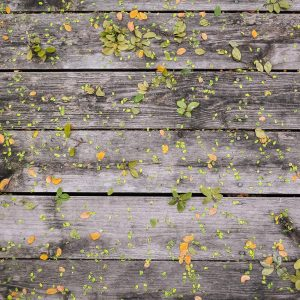 Leaves on timber decking